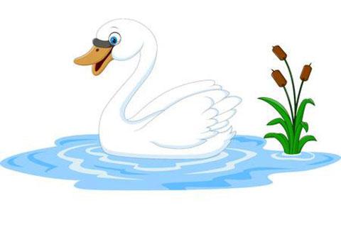 Swan News