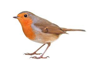 Our class bird